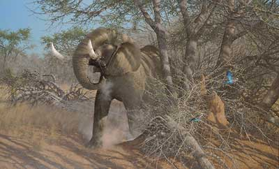 """Michael Sieve  Hand Signed and Numbered Limited Edition Canvas Giclee:""""Rolling Thunder-Elephant"""""""