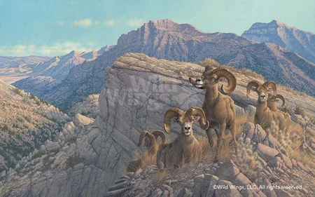 """Michael Sieve Hand Signed and Numbered Limited Edition: """"Desert Kings-Bighorn Sheep"""""""