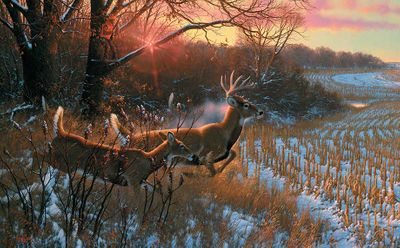 """Michael Sieve Hand Signed and Numbered Limited Edition Premier Canvas Giclee:""""Red Alert-Whitetail Deer"""""""