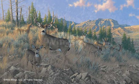 """Michael Sieve Hand Signed and Numbered Limited Edition Print: """"The Magic Hour-Mule Deer"""""""