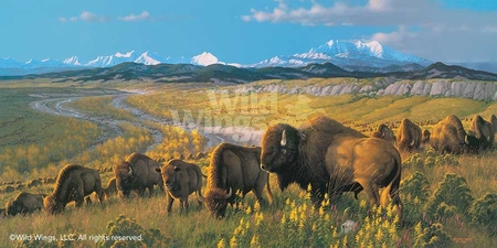 "Michael Sieve Hand Signed and Numbered Limited Edition Print: ""The Passing Herd-Bison"""
