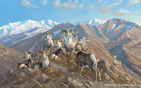 """Michael Sieve Hand Signed and Numbered Limited Edition:""""Stone Kings – Stone Sheep Print"""""""