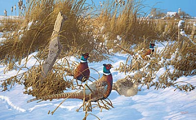"""Michael Sieve Handsigned and Numbered Limited Edition Print: """"Corner Post Refuge-Pheasants """""""