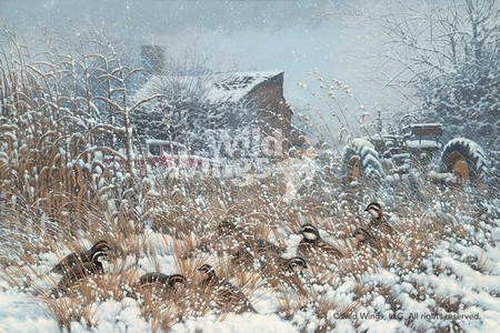 """Michael Sieve Handsigned and Numbered Limited Edition Print: """"Hunkered Down-Bobwhite Quail"""""""