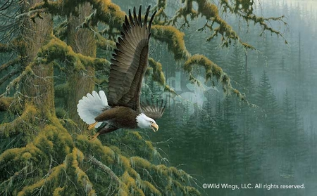 """Michael Sieve Handsigned and Numbered Limited Edition Print: """"Misty Forest - Bald Eagle"""""""