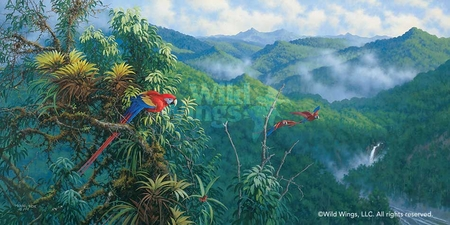 """Michael Sieve Handsigned and Numbered Limited Edition Print: """"Panama Red Macaws"""""""