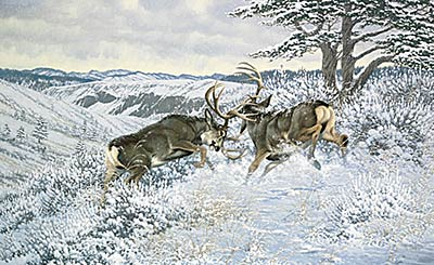 "Michael Sieve Limited Edition Print: ""Battling Bucks - Mule Deer"""