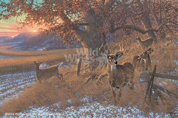 """Michael Sieve Limited Edition Print:""""Down from the Ridge - Whitetail"""""""
