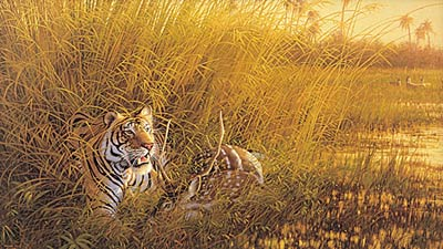 """Michael Sieve Limited Edition Print: """"Heart of India-Tiger """""""