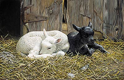 """Persis C. Weirs Limited Edition Print:""""Ebony and Ivory"""""""