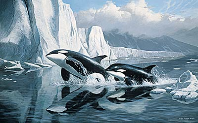 "Persis C. Weirs Limited Edition Print:""Glacier's Edge-Orcas"""