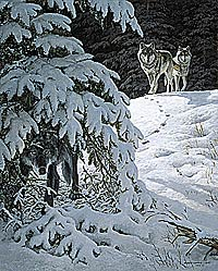 "Persis C. Weirs Open Edition Print:""Silent Watch-Gray Wolves"""