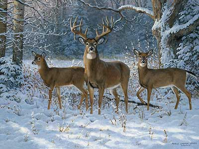 """Persis Clayton Weirs Handsigned & Numbered Limited Edition Print:""""Winter Trio-Whitetails """""""