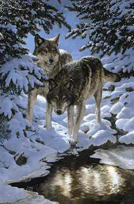 "Persis Clayton Weirs Limited Edition Print: ""Icy Dawn-Gray Wolves"""