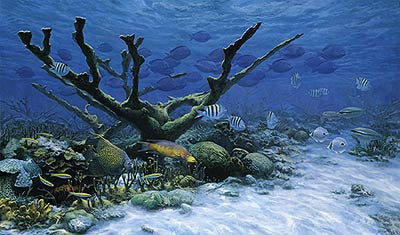 "Randall Scott Limited Edition Print:""The Caribbean Reef"""