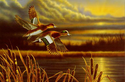 """Richard Clifton Limited Edition Print:""""Widgeon-Outfront"""""""