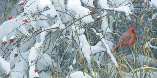 """Robert Bateman 2009 Earth Day Handsigned and Numbered Canvas Giclee :""""Fresh Snow - Cardinal"""""""