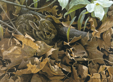 """Robert Bateman Anniversary Limited Edition Giclee on Canvas:""""Among the Leaves - Cottontail"""""""