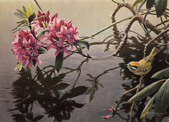 "Robert Bateman Artist Signed Limited Edition Clayboard Giclee:""Golden-Crowned Kinglet and Rhododendron"""