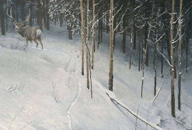 """Robert Bateman Hand Signed and Numbered Limited Edition Canvas Giclee:""""Forest Trail - Mule Deer"""""""