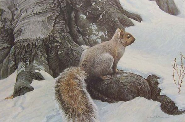 """Robert Bateman Hand Signed And Numbered Limited Edition Canvas Giclee :""""Gray Squirrel"""""""