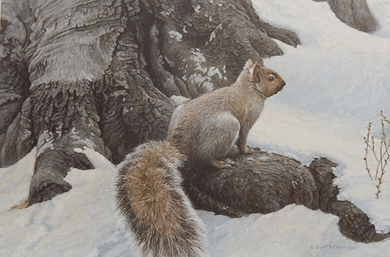 "Robert Bateman Hand Signed And Numbered Limited Edition Canvas Giclee :""Gray Squirrel"""