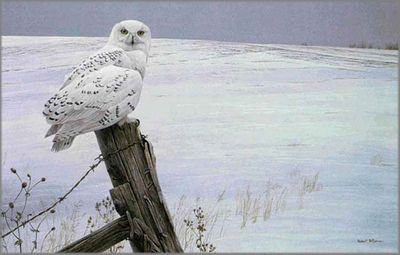 """Robert Bateman Hand Signed and Numbered Limited Edition Canvas Giclee: """"Ready for the Hunt (Snowy Owl)"""""""