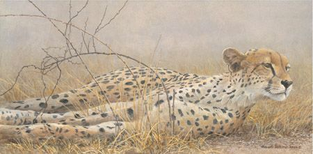 "Robert Bateman Hand Signed and Numbered Limited Edition Canvas:""Londolosi Cheetah"""