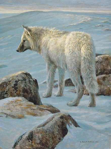 "Robert Bateman Hand-Signed and Numbered Limited Edition Giclee on Canvas: ""Arctic Evening - White Wolf"""