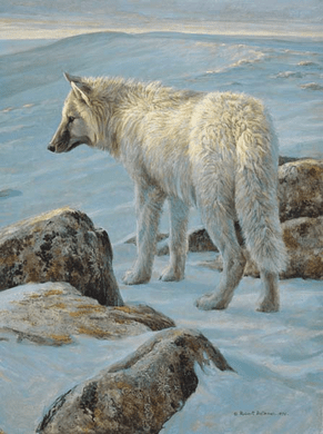 """Robert Bateman Hand-Signed and Numbered Limited Edition Giclee on Canvas: """"Arctic Evening - White Wolf"""""""