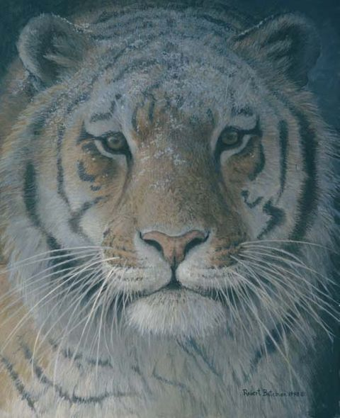 """Robert Bateman Hand-Signed and Numbered Limited Edition Giclee on Canvas: """"Tiger at Dusk"""""""