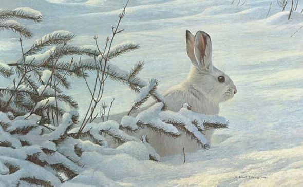 "Robert Bateman Hand-Signed and Numbered Limited Edition Giclee on Canvas: ""Winter - Snowshoe Hare"""