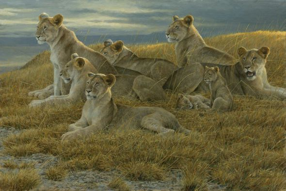 """Robert Bateman Hand Signed And Numbered Limited Edition Print and Canvas Giclee :""""Family Gathering - Lioness and Cubs"""""""