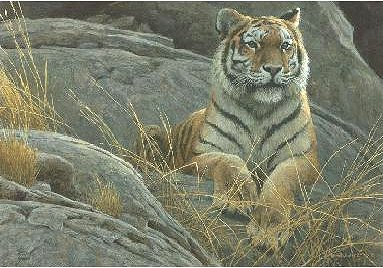 "Robert Bateman Hand Signed And Numbered Limited Edition Print  and Canvas Giclee :""Monarch of Asia"""
