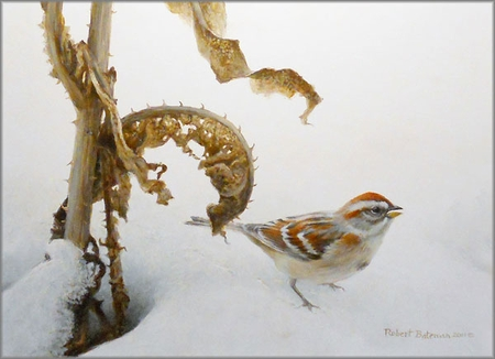 """Robert Bateman Hand Signed And Numbered Limited Edition Print and Canvas Giclee:""""Tree Sparrow and Teasal"""""""