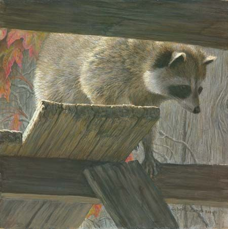 """Robert Bateman Hand Signed and Numbered Limited Edition Print: """"The Prowler - Racoon"""""""
