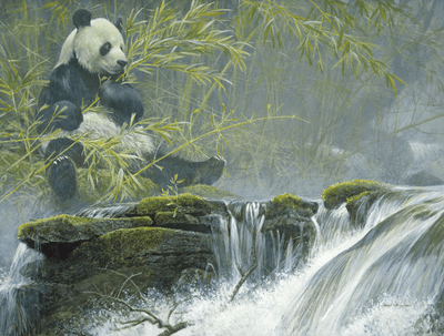 "Robert Bateman Hand Signed And Numbered Limited Edition Renaissance Canvas Giclee :""Giant Panda"""