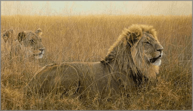 """Robert Bateman Hand Signed And Numbered Limited Edition Renaissance Collection Canvas Giclee:"""" Lions in the Grass """""""