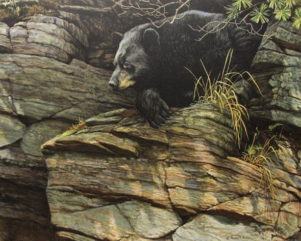 """Robert Bateman Hand Signed and Numbered Limited Edition Renaissance Giclee Canvas :""""Watchful Repose Black Bear"""""""
