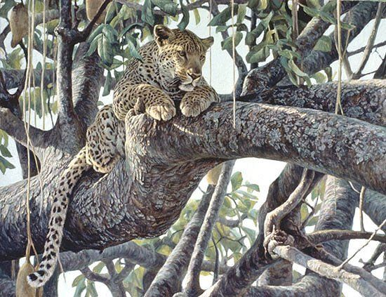 "Robert Bateman Hand Signed and Numbered Limited Edition Rennaissance Canvas Giclee: ""Leopard In A Sausage Tree"""