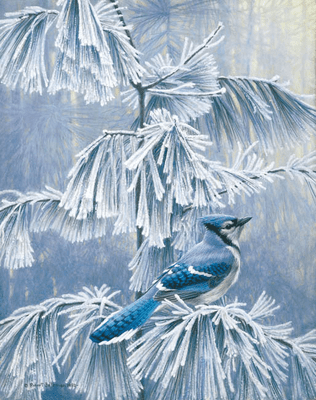 "Robert Bateman Handsigned and Numbered Limited Edition ClasArt Giclee on Board:""FROSTY MORNING - BLUE JAY """