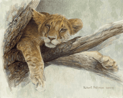 """Robert Bateman Handsigned and Numbered Limited Edition ClasArt Giclee on Board:""""UP A TREE - LION CUB"""""""