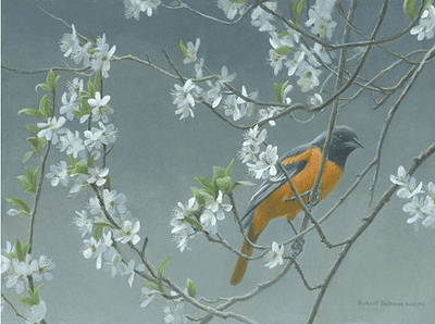 """Robert Bateman Handsigned and Numbered Limited Edition Giclee on Canvas:""""Baltimore Oriole and Plum Blossoms"""""""