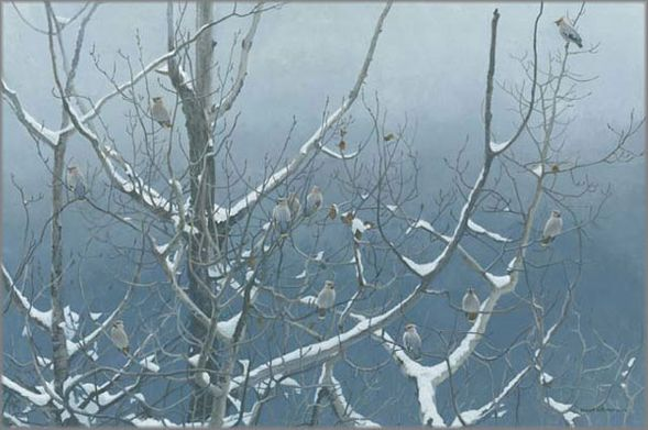 """Robert Bateman Handsigned and Numbered Limited Edition Giclee on Canvas: """"Bohemian Waxwings and Poplar"""""""