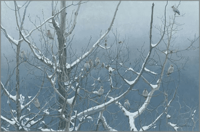 "Robert Bateman Handsigned and Numbered Limited Edition Giclee on Canvas: ""Bohemian Waxwings and Poplar"""