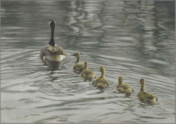 """Robert Bateman Handsigned and Numbered Limited Edition Giclee on Canvas: """"Canada Goose and Goslings"""""""