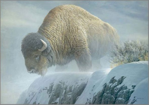 """Robert Bateman Handsigned and Numbered Limited Edition Giclee on Canvas: """"Winter Bison"""""""