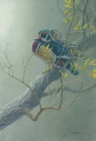 """Robert Bateman Handsigned and Numbered Limited Edition Giclee on Paper:""""  Wood Duck Pair in Willow"""""""
