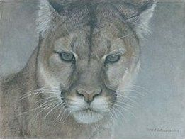 """Robert Bateman Handsigned and Numbered Limited Edition:""""Intent – Cougar"""""""