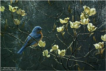 """Robert Bateman Handsigned and Numbered Limited Edition Orginal Lithograph on Paper Print:""""Bluebird And Blossoms - Prestige"""""""